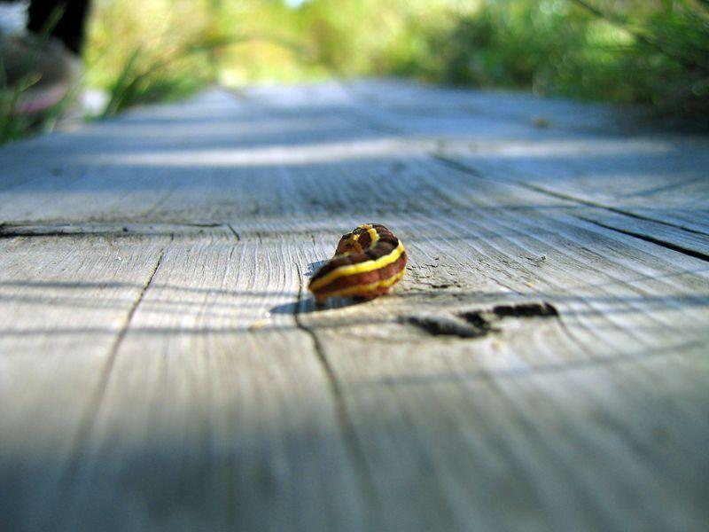 Глубина резкости с фокусом на гусеницу