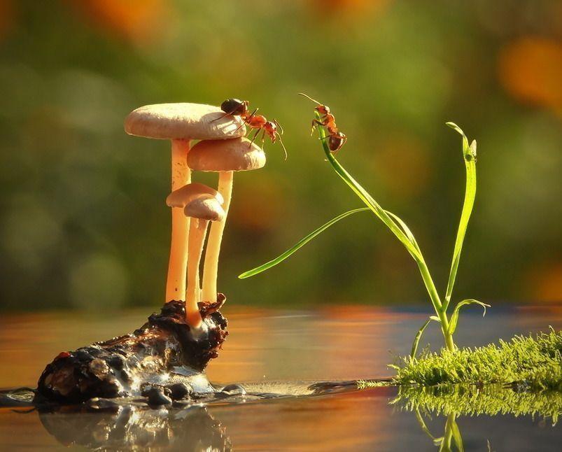 Муравьи в грибах